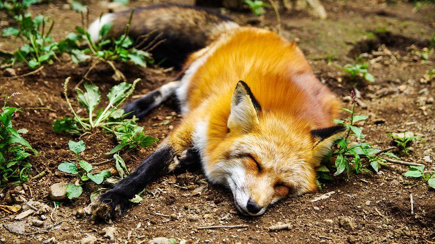 Od maja Firefox wyłączy niebezpieczny protokół FTP, wkrótce go usunie