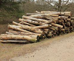 Nielegalna wycinka drzew w woj. lubelskim. Starosta podjął kroki