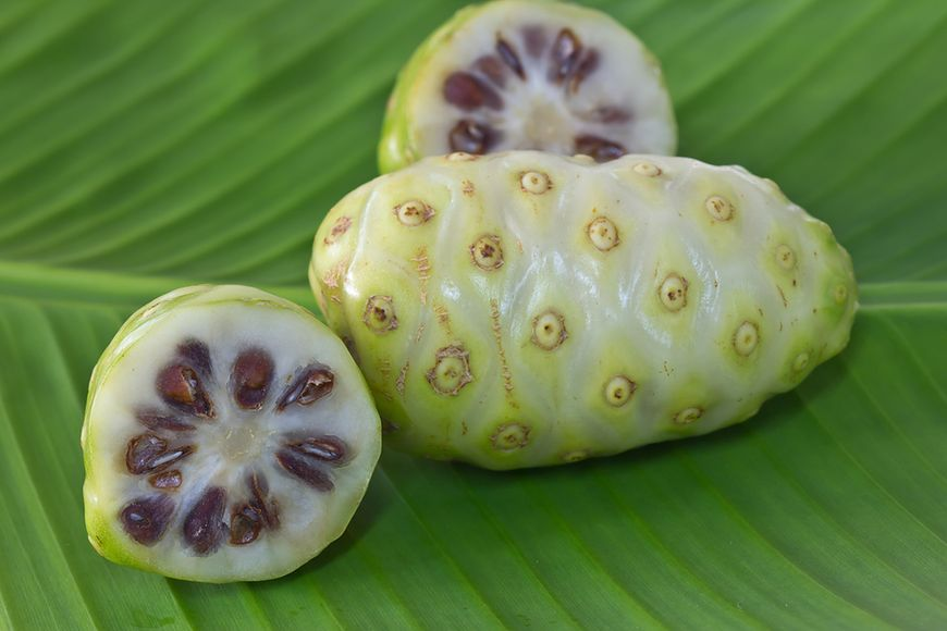 Właściwości zdrowotne owoców noni