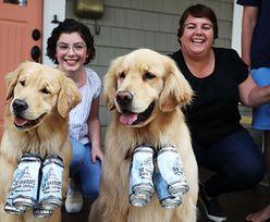 Komu piwo? Psy pomagają w dostawach podczas epidemii koronawirusa