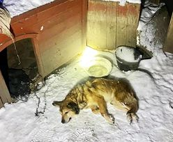 Wstrząs na Dolnym Śląsku. Słowa właściciela psa po prostu szokują