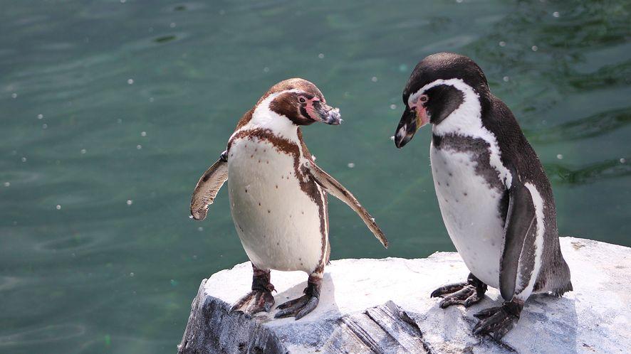 Linux 5.0 oficjalnie wydany. Wreszcie ze wsparciem dla FreeSync w AMDGPU