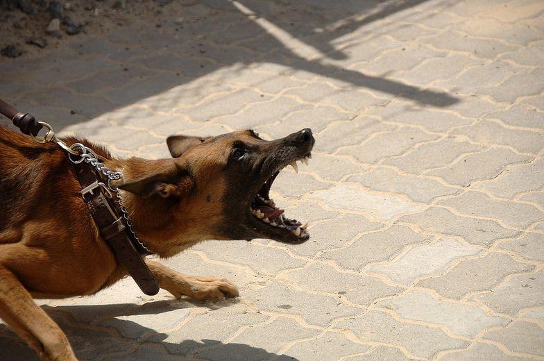 Agresywne psy zaatakowały matkę z dziećmi. 4-latek w szpitalu