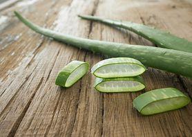 Aloes - właściwości, przeciwwskazania do stosowania