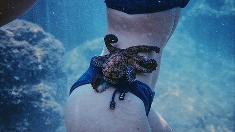 """Linux 5.4 """"Kleptomaniac Octopus"""" wydany w wersji stabilnej"""