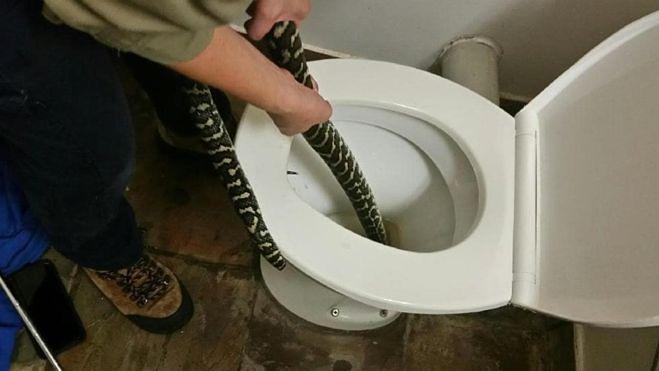 Korzystała z toalety, gdy ukąsił ją ogromny pyton