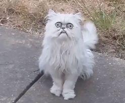 Najbrzydszy kot świata? Internauci go pokochali