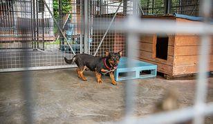 Warszawa. Do schroniska przyjęto więcej psów, niż zakładano