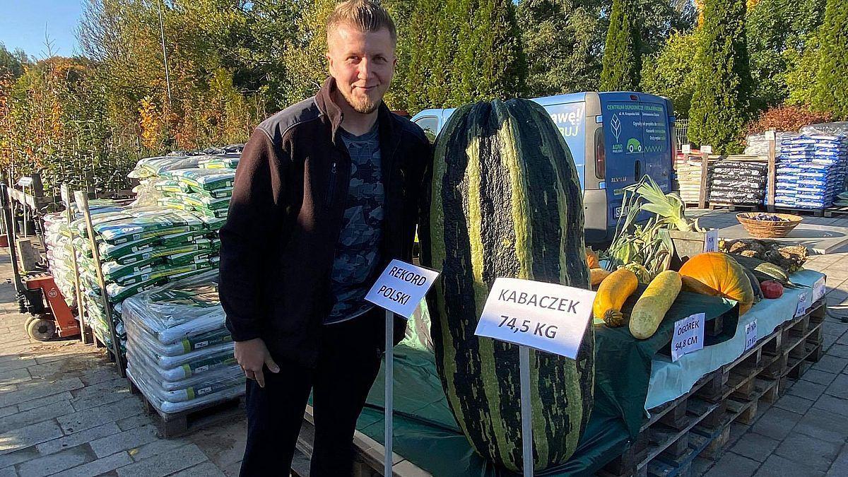 Kabaczek-gigant pochodzi z uprawy Pana Tomasza z Bytomia