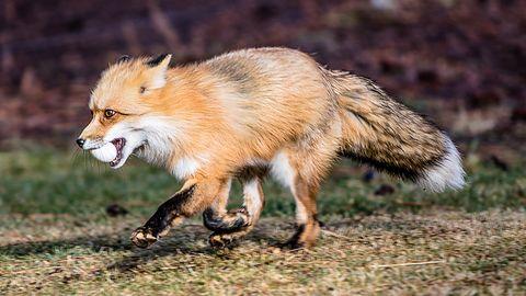Nowy Firefox uruchomi gry i aplikacje webowe tak szybko, jakby ładował obrazki