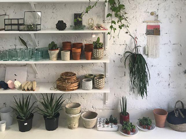 Moda na rośliny. Nie da się bez nich żyć?