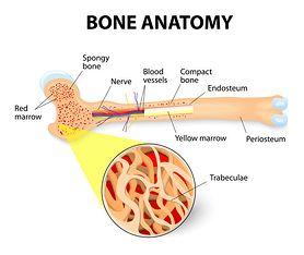 Tkanka chrzęstna (chrząstka) - charakterystyka, rola w organizmie, najczęstsze choroby