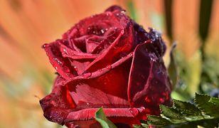 Dzień Matki 2020. Lidl i Biedronka zapraszają do skorzystania z promocji