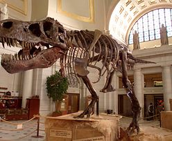 Dinozaury miały ten sam problem na starość, co ludzie. Zaskakujące!