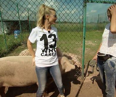 Joanna Krupa znów pomaga zwierzętom. Jej ulubieńcami zostały świnie: Woli i Tysio