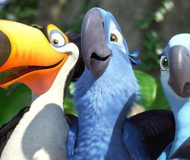 """Papuga ara modra całkowicie wyginęła. Pojawiła się w animacji """"Rio"""""""