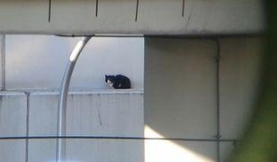 """Kot utknął pod wiaduktem. """"Wpadł w otwartą szczelinę"""""""