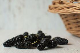 Morwa czarna – właściwości, zastosowanie, uprawa