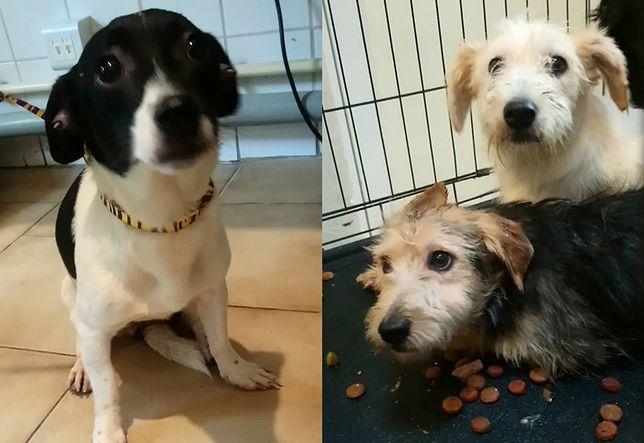 Psy odebrane ze zdewastowanej kawalerki w Nowej Hucie