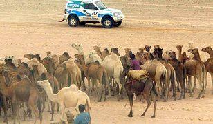 Odwiedzili Mauretanię. Ponad 400 tysięcy na podróże urzędników ministerstwa
