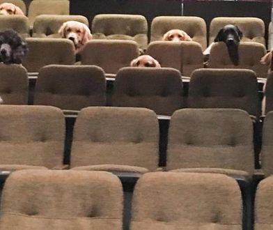 """Psy na musicalu w teatrze w Kanadzie. """"Zachowywały się bardzo grzecznie. Żaden z nich nie szczeknął"""""""