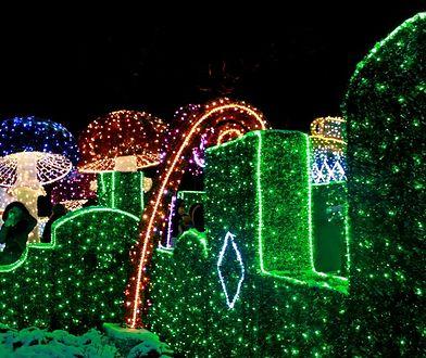 Labirynt Światła w Wilanowie [ZDJECIA]