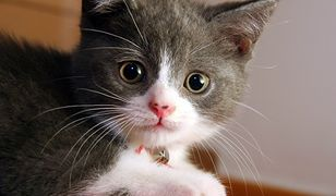 Ruszyła bezpłatna sterylizacja psów i kotów
