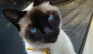 Za darmo: czipowanie psów i kotów