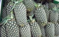Sadzenie ananasa