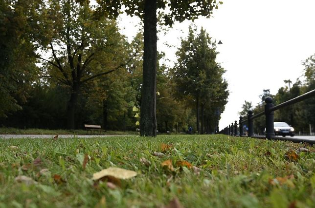 Warszawa. Rozpoczęło się ostatnie w tym roku koszenie trawy