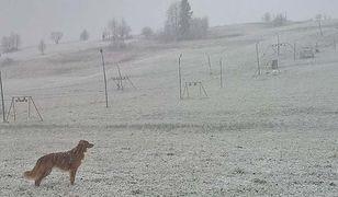 W niedzielny poranek internauci uwiecznili opady śniegu