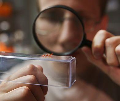 """Naukowcy z UW skonstruowali robota-gąsienicę. """"Może pchać obiekty sześć razy cięższe niż on sam"""""""