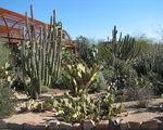 Sadzenie kaktusa