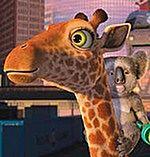 Żyrafa z osobowością Agnieszki Dygant