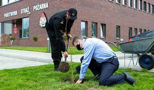 Śląskie. Sadzą drzewa w Bytomiu. Mają pomóc w walce z niską emisją, która dusi