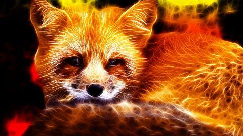 Pale Moon Commander: Firefox niczym dobrze skrojony garnitur