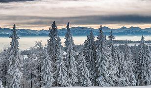 Widok na Tatry Zachodnie podczas zimowej wycieczki w Gorcach