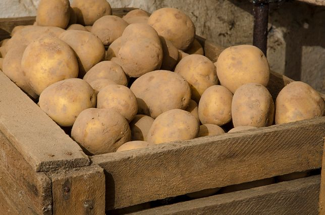 Ziemniaki to przede wszystkim świetny dodatek do obiadu. Ponad to wykorzystuje się go w zupach, kremach, sałatkach. Przepisy z ziemniakami