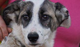 Jeden z otrutych szczeniaków, znalezionych w lesie
