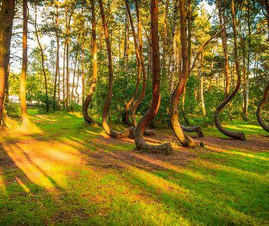Polskie lasy kryją w sobie wiele ciekawych tajemnic