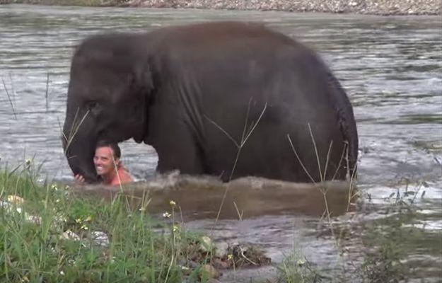 Słoń ratuje topiącego się mężczyznę