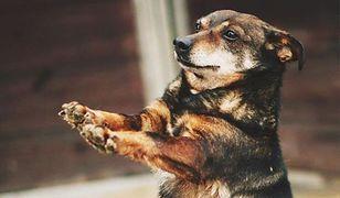 """Pomóż zwierzętom z mazowieckich schronisk i """"Kup gryzaka dla bezdomniaka"""""""