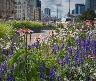 Warszawa. Kwiatowa przestrzeń w centrum miasta (fot. Zieleń Warszawska - Facebook)