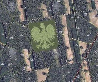 Orzeł ma mieć 310 m szer. i obejmie powierzchnię 11 ha lasu. W jego skład wejdą brzozy, modrzewie i sosny. W sumie posadzonych zostanie 100 tys. drzew