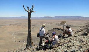 Naukowcy na południu Namibii pracują w miejscu, gdzie dawniej było morze i rafy