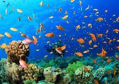 Marsa Alam - raj dla miłośników sportów wodnych