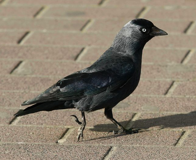 Już ponad 220 ptaków zostało otrutych