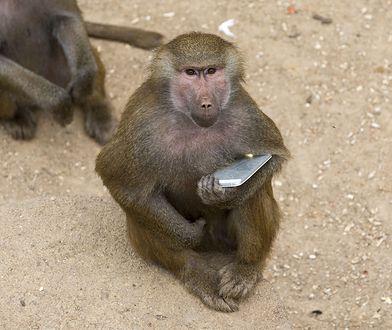 Zgubił telefon. Gdy go znalazł, były na nim selfie małpy