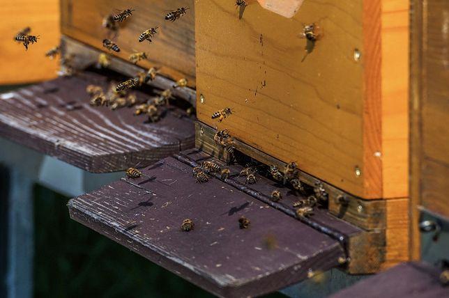 Piaseczno. 50-latek został pokąsany przez owady