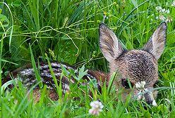 Tajemnice dzikiej przyrody